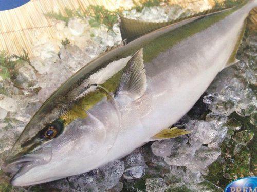 comprar pescado en Mallorca
